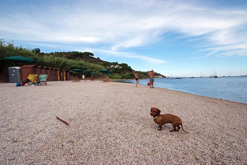 Spiaggia per cani all'Elba